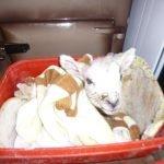 A lamb warming up inside
