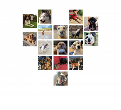 a collage of dog photos in the shape of a heart