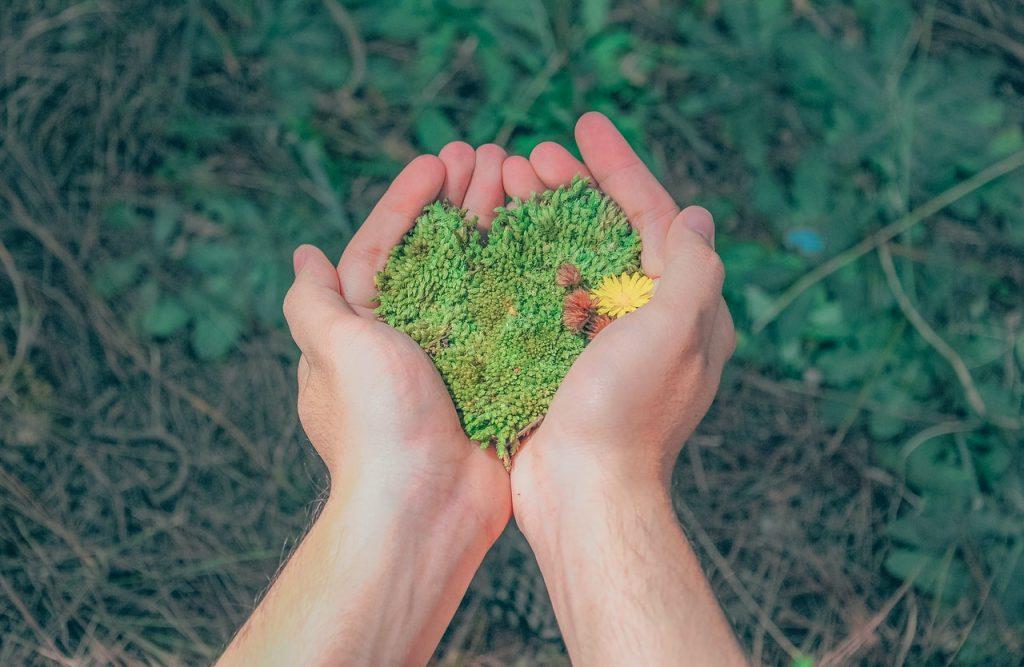 Hands holding a green heart shape